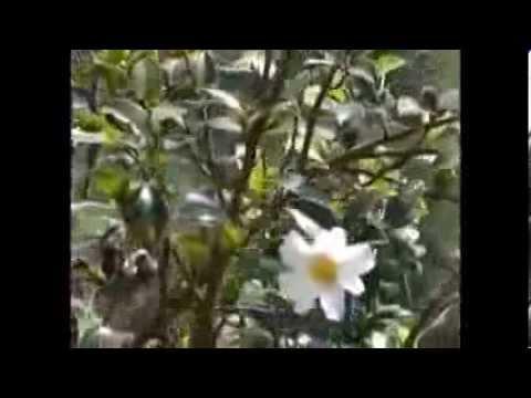 [Highland Travel] Du ngoạn Hà Giang