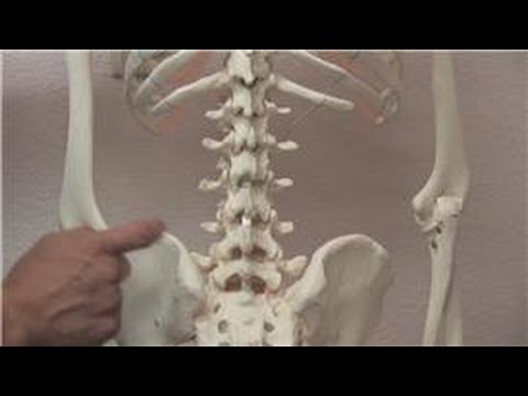Chiropractic Treatments : How to Manage Chronic Back Pain
