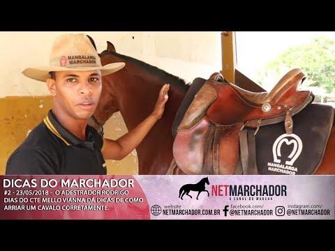 #2 DICAS DO MARCHADOR - RODRIGO DIAS - COMO ARRIAR O CAVALO - MANGALARGA MARCHADOR