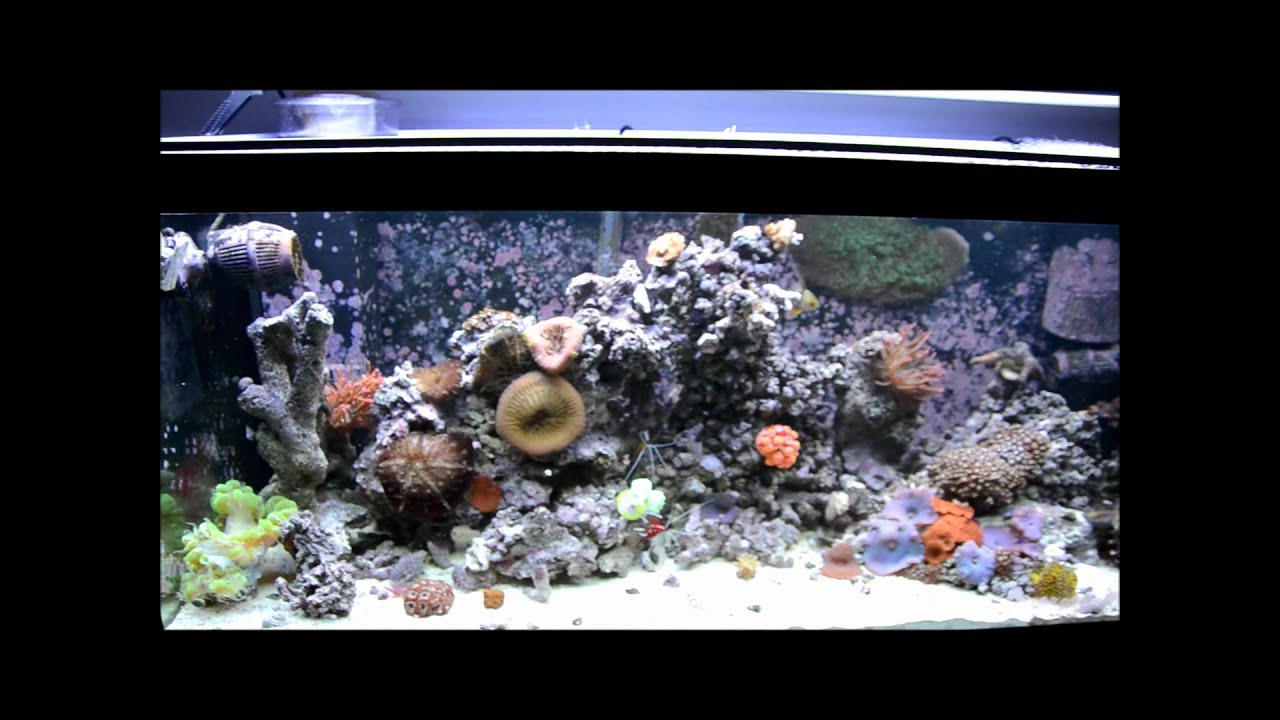 Best saltwater fish for 75 gallon tank 2017 fish tank for Aquarium set