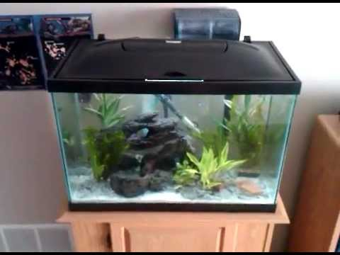 20 gallon tropical aquarium youtube for How many fish in a 20 gallon tank