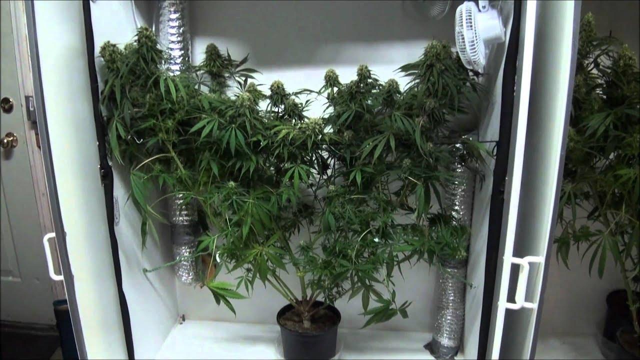 Indoor Marijuana Grow Closet