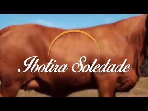 Destaque Leilão Arenas 2017: IBOTIRA SOLEDADE (SOL 861)