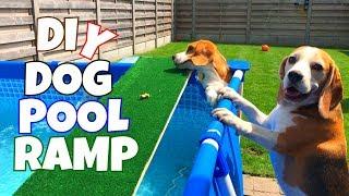 DIY Dog Pool Ramp : Cute and Funny Beagle Dogs