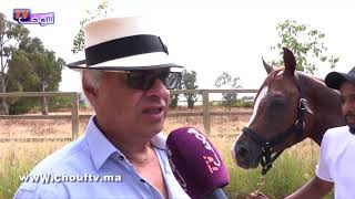 حرس البراق خيول عربية مغربية أصيلة تنافس أشهر السلالات بالعالم | روبورتاج