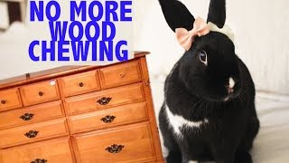 Stop your Bunny from Chewing your Wooden Furniture :  HACK