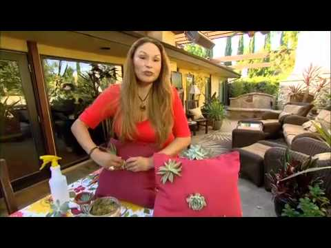 The Garden Gurus - Shirley's Landscape Trends: Succulent Pillows