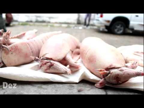 Carne de tatu e porco do mato apreendidos na feira do Multirão em Manaus