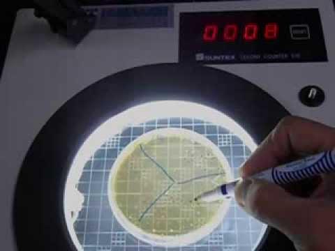 使用菌落計數器