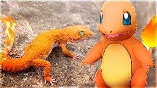 Nhà bạn đang có POKEMON bạn có biết? | 11 Pokemon có thật ngoài đời  | Ơ RÊ CA