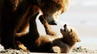 Bears Trailer 2014 Disney Movie Official [HD]