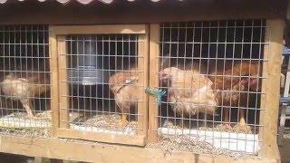 Como hacer una jaula casera para pollos