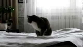 Pogozással indul a macska reggelje