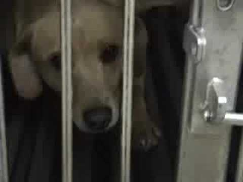 Iams Cruelty on YouTube
