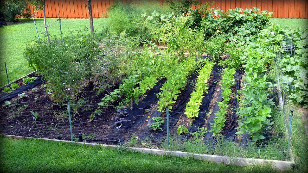 Labor day update in the chef s vegetable garden youtube