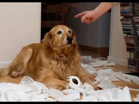Ultimate Funny Guilty Dog Video Compilation 2013 [HD]