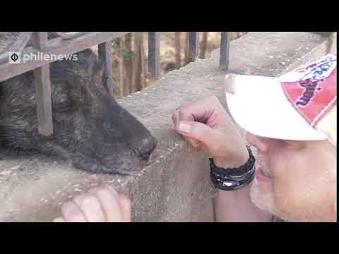 Πυρκαγιά στο Μάτι: Θλιμμένος σκύλος