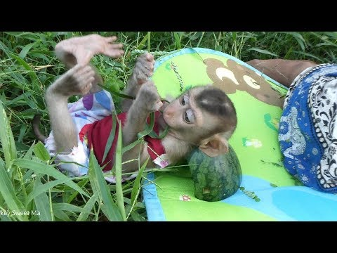 Baby Monkey | Sweet-to Have Funny Time With His Family At Green Grass