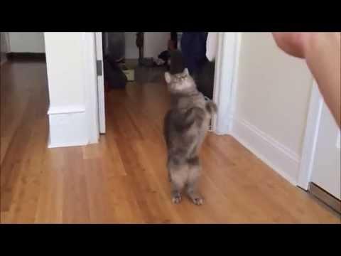 Мојата мачка Луна има 3 килограми лудило. Еве ви доказ!