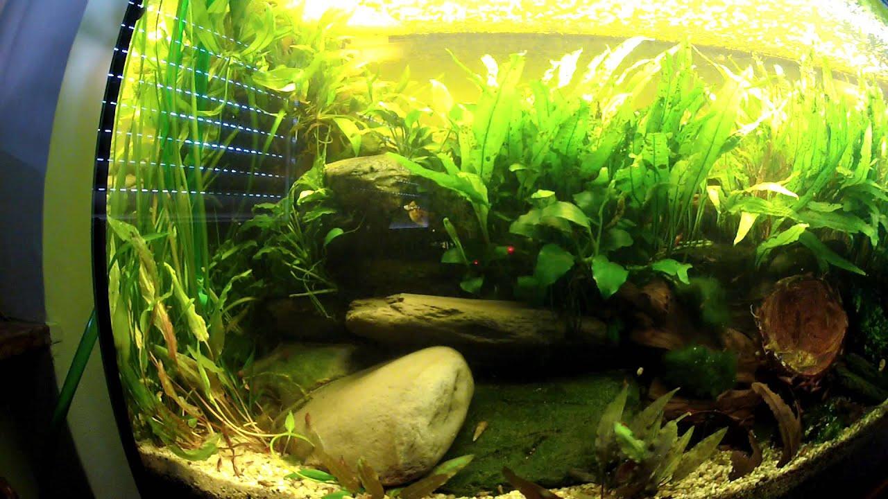 for Aquarium 200l
