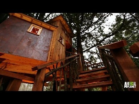 Behind the Build: Record-High Recording Studio | Treehouse ...