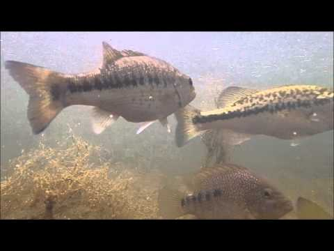 Underwater Fish Camera In Guadalupe River Texas Hill Country Spring Fed Creek Bass
