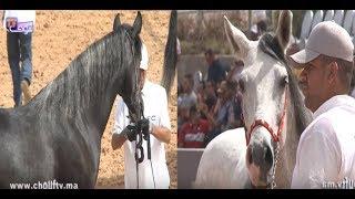 بالفيديو:الجديدة تحتضن النسخة الأولى لمسابقة الخيول العربية و البربرية بمشاركة أفضل الخيول في المغرب | بــووز