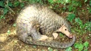 Fauna Brasileira