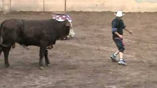 Solo Toros Accidente De La Coneja