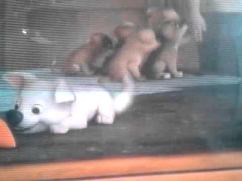 Bolt un perro fuera de serie el principio youtube for Cosas fuera de serie
