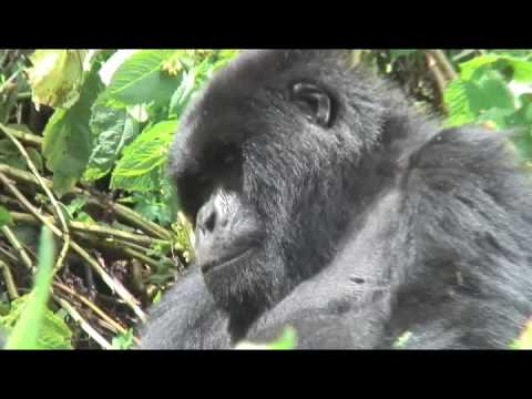 Rick DellaRatta and Jazz for Peace visit the Jungles of Africa and Hotel Rwanda