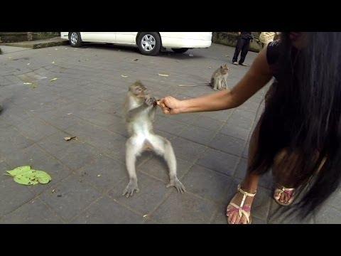 Monkey Forest Bali UBud - GoPro HD