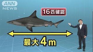 茨城沿岸でサメ目撃
