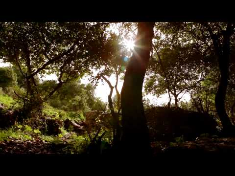 Stock Footage of the sun shining in a silhouetted grove of trees in Israel.