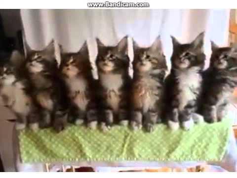 Asli Gokil Kucing ini Lucu Banget !!
