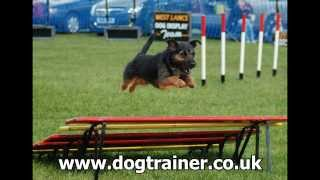 Puppy Training Classes Liverpool, Dog Training Classes Liverpool view on break.com tube online.