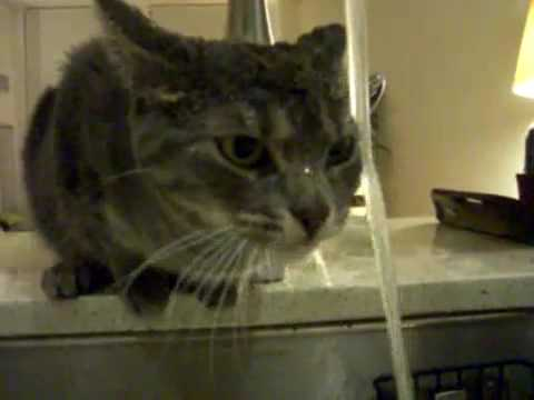Inefficient Water-Drinking Cat