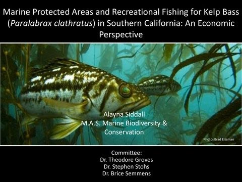 Alayna Siddall: Marine Protected Areas and Recreational Fishing for Kelp Bass in Southern California