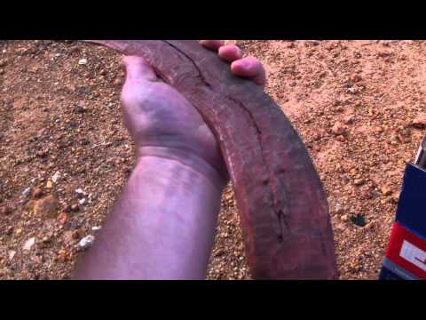 Treasure hunting for Aboriginal artifacts in Australia