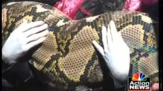 Largest Snake Living In Captivity Medusa Sets World Record