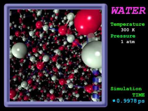 Molecular Dynamics Simulation of Water