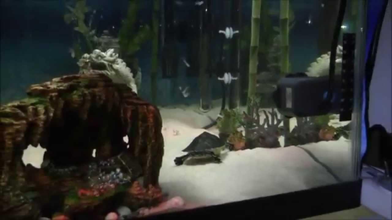 My Custom Turtle Aquarium Indoor Pond Youtube
