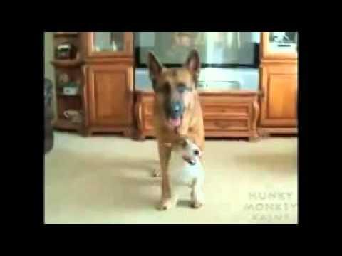 Chú Chó Nhảy Gangnam Style Cực Hay