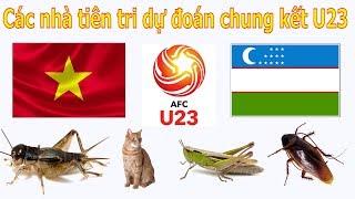 Dự Đoán Kết Quả Trận Đấu Giữa U23 Việt Nam - U23 Uzbekistan | Ai Sẽ Là Nhà Vô Địch