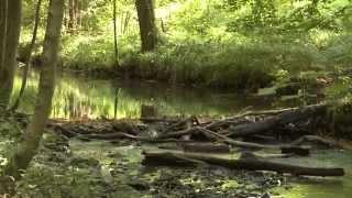 Le patrimoine naturel d'Ohey et Gesves