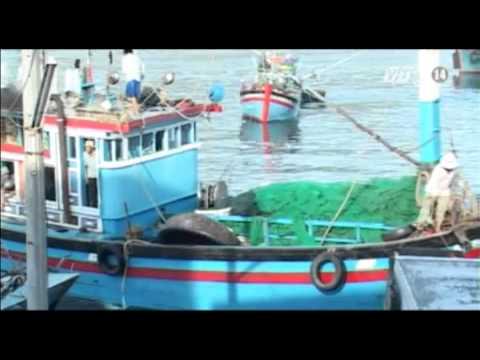 VTC14_Bình Thuận: Báo động tình trạng đánh bắt tận diệt thủy sản