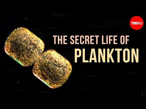 The Secret Life of Plankton