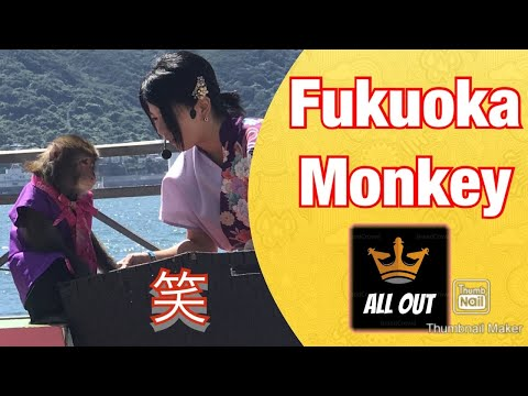 面白いモンキー(Funny Monkey)