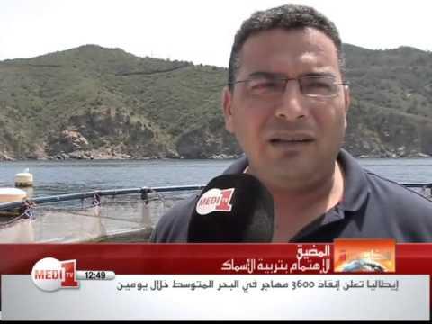 عن تربية الأحياء المائية بمدينة المضيق