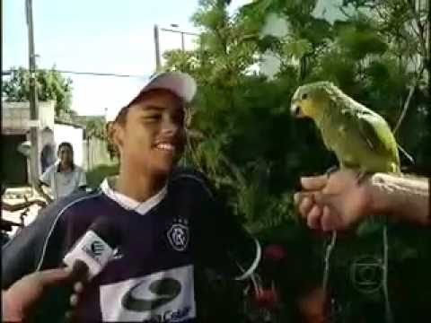 Globo Esporte: Papagaio canta o hino do Paysandu!